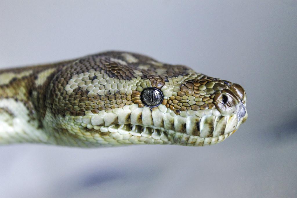 H P Reptiles Sneks! - Reptile Forum...