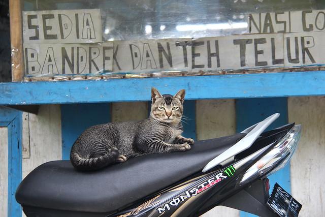 Maninjau, 05/02/2012