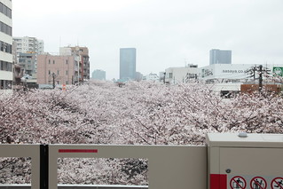 2014年の桜 - 目黒川
