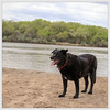 Bodi on the Rio Grande by Grant Condit