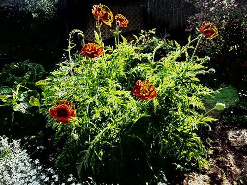 Im Garten Mai 2014