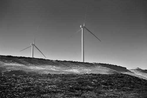 blackwhite blueskies bluff capturenx2edited colorefexpro day7 drivealongcolumbiariver hillside lookingsouth nature nikond800e project365 triptomountrainierandcolumbiarivergorge windfarm windturbines windmillfarm arlington unitedstates