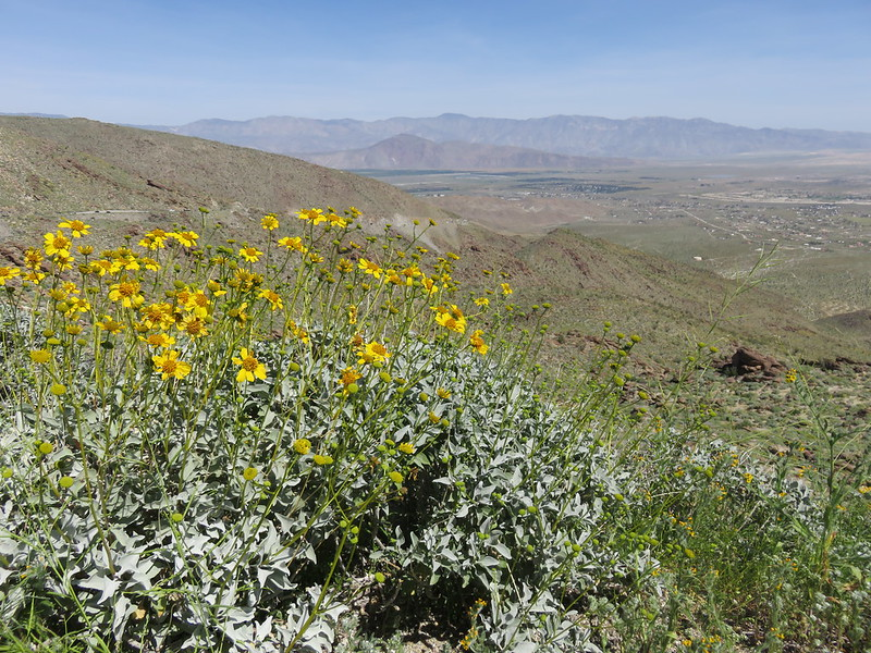 Looking out at Anza-Borrego