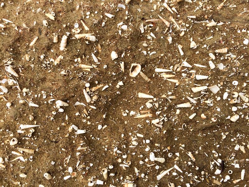 tasmania-wynyard-Freestone-cove-sandstone-with-fossils