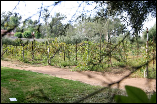 Bernardo Winery (5)