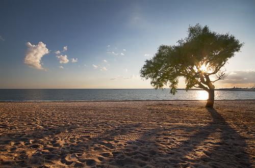 sunset shadow tree beach 7d 1020 goderich