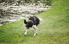 juega con perros y terminar�s mojado