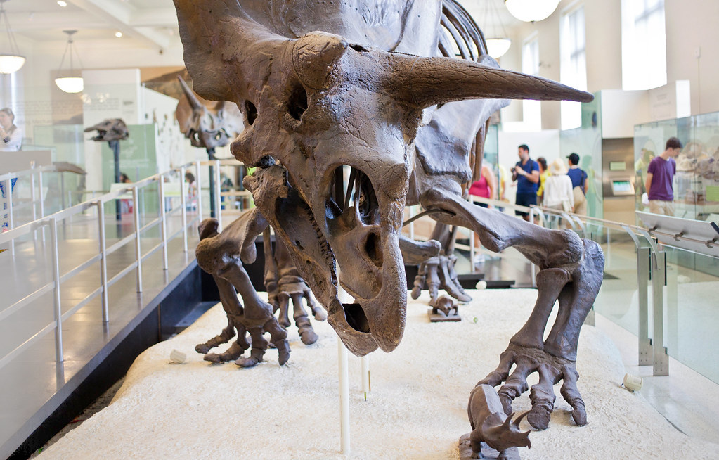 Museum of Natural History | New York