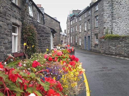 Flowers in the rain by Helen in Wales