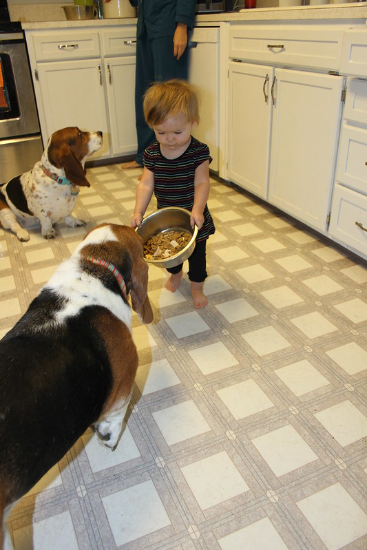 Feeding the dogs