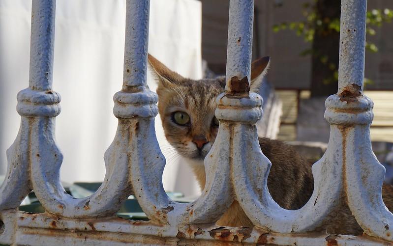 Stray-Cats-Istanbul-(12)