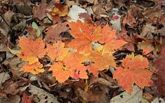 Lingering Autumn (2)