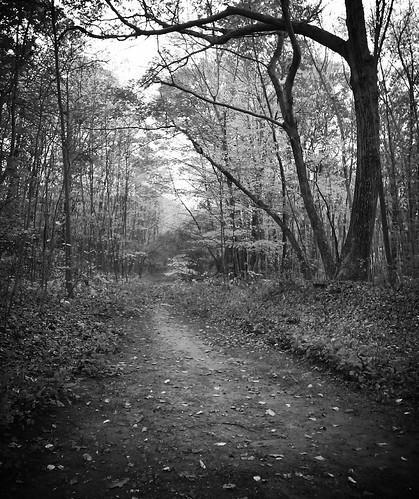 november trees leaves path blackstoneriverbikeway flickrandroidapp:filter=none