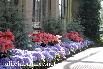 A Longwood Christmas: Conservatory