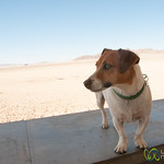 Mighty Dog - Aus, Namibia