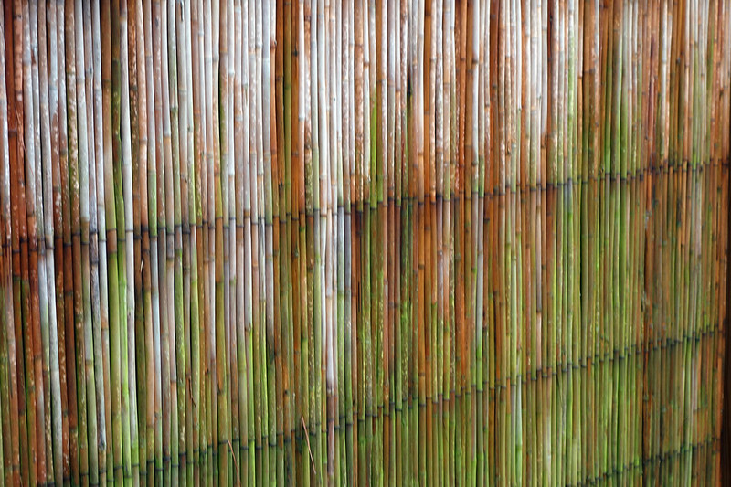 Bamboo fence in the rain