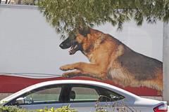 pet(0.0), street dog(0.0), wolfdog(0.0), animal(1.0), dog(1.0), mammal(1.0), police dog(1.0),