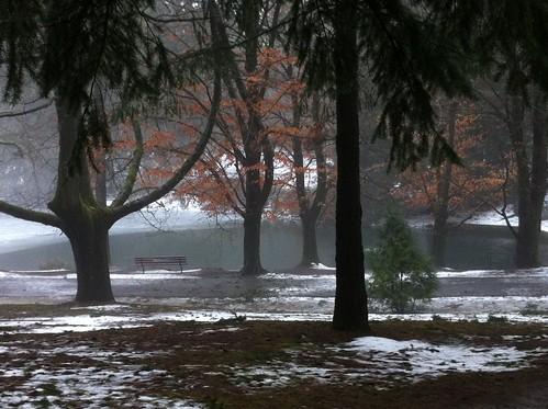 ice laurelhurst pdxsnow firwoodlake