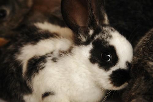 Flickr_bunny_4