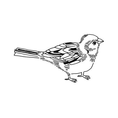 City Bird Three