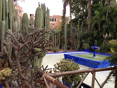 Revel in the Serenity and shade at Majorelle Garden - Things to do in Marrakech