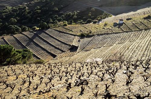 winter sunset france hiver collioure vignes vinyard coucherdesoleil languedocroussillon cultureenescalier arnaudvautrin