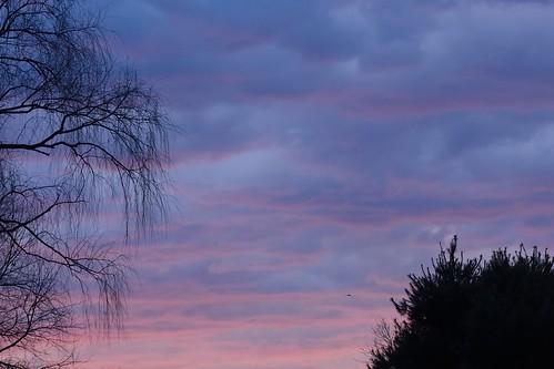 sunrise bonniecoatesott
