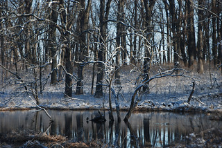 Late Snow, Mystical Swamp, Morton Arboretum, April 15, 2014 91 full bpx