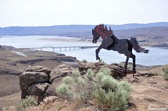 Petrified wood and Wild Horse Monument
