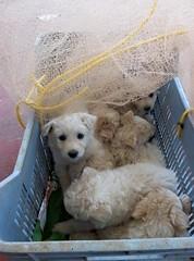I sette cuccioli son fortunatamente tutti vivi