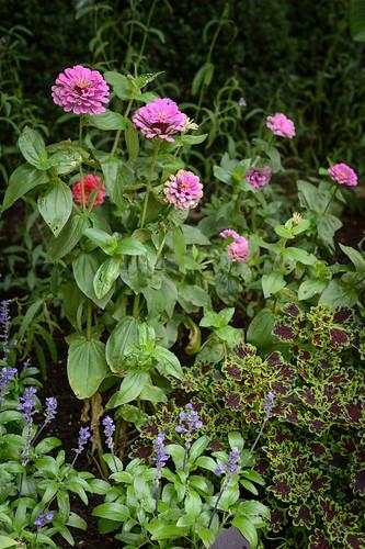 FilipWolak-LSBID-Gardens-8190