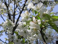 05 Zima pomlad