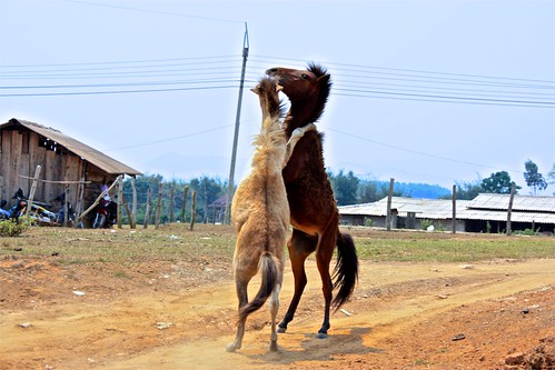 we stumbled upon these two horses playing/fighting with eachother