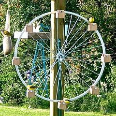 Ferris Wheel Birdfeeder