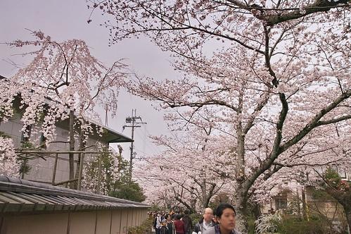 【写真】2013 桜 : 哲学の道/2018-12-24/IMGP9205