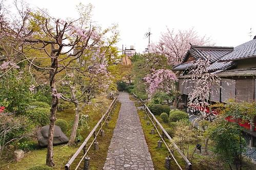 【写真】2013 桜 : 閑臥庵/2021-07-16/IMGP9631