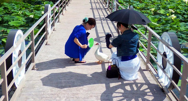 IF IT LOOKS LIKE A DUCK, IT IS A DUCK -- Two Gals Meet a Beggar at the SOUTHEAST BOTANICAL GARDENS
