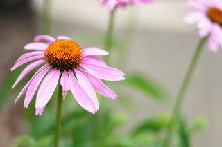 iun-flower3