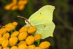Schmetterlinge und Falter