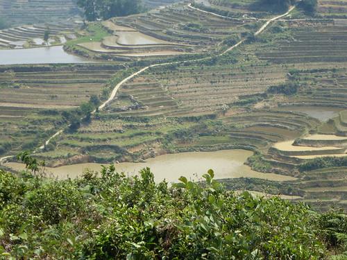 Yunnan13-Yuanyang 16-Qingkou (6)