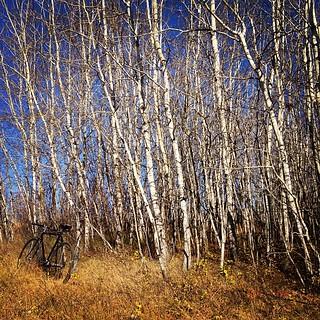 Barebone trees