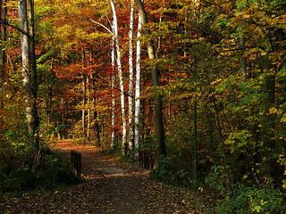 Good morning autumn