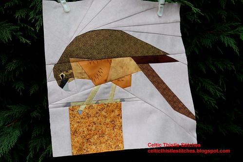 Kiwi Falcon