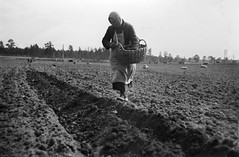 Kollektivjordbruk i Sovjetunionen (1935)