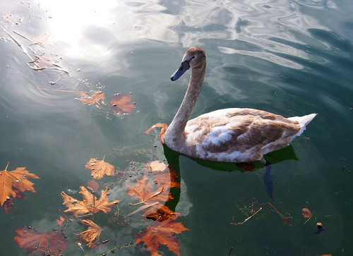 In swan's world ~