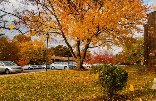 autumn sun color fall colors leaves yellow leaf sunny falling