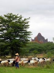 goat herders day 1 Bagan
