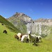 Sheep graze around the Rifflsee in the summer by B℮n