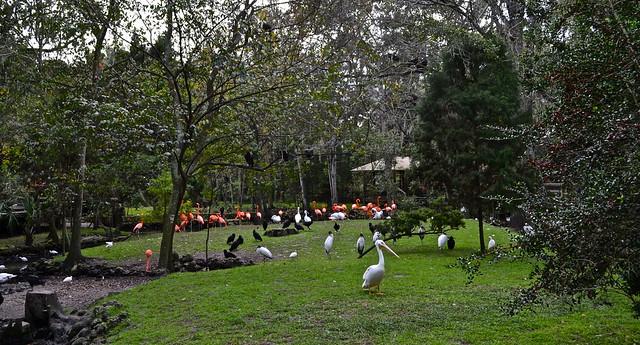 aviary at homosassa state park