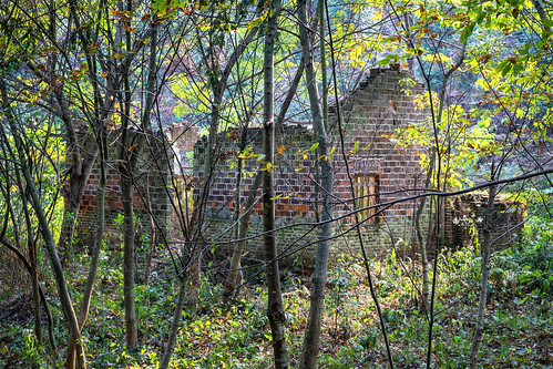 Foresty Institute - Hunan Province, China by andiwolfe